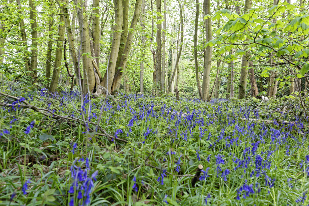 into the bluebell woods warwickshire